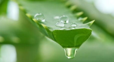 Mannatech Video Reveals Secret Aloe Vera Process